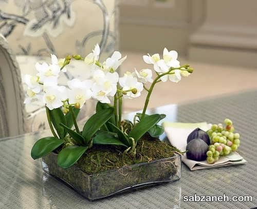 گل های ارکیده در گلدان شیشه ای