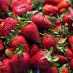 کاشت توت فرنگی در باغچه و گلدان
