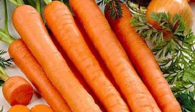 کاشت هویج در گلدان