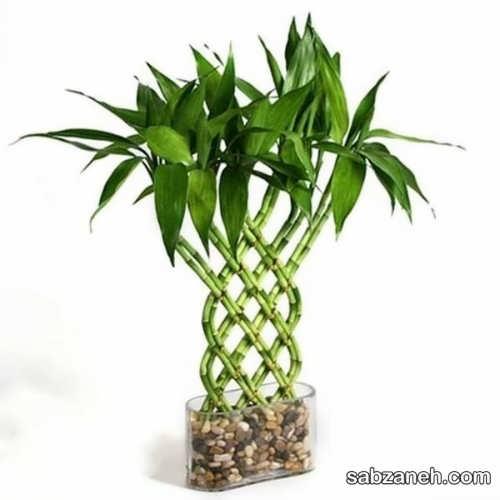 پنج روش متفاوت برای فرم دادن به گیاه بامبو