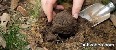 کاشت قارچ دنبلان