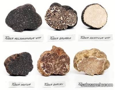 انواع قارچ دنبلان