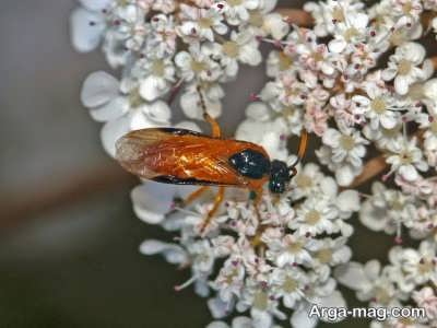 حشرات برگ خوار