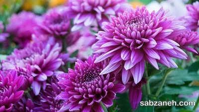 انتخاب گل مناسب برای بالکن