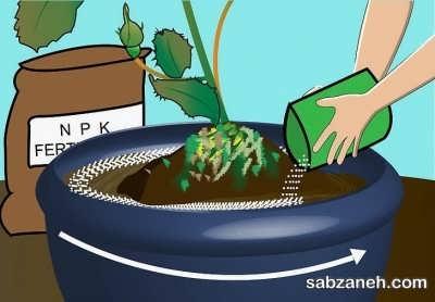 کود دهی به درخت انگور