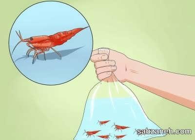 استفاده از جانداران برای تراریوم