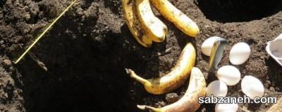 استفاده از موز برای تقویت خاک