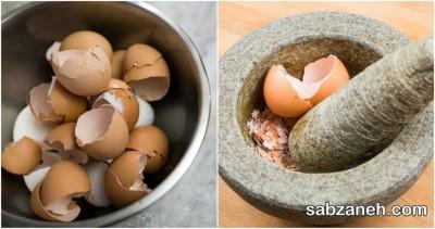 خرد کردن پوست تخم مرغ برای تهیه کود طبیعی