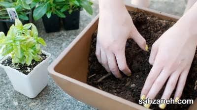 جا به جایی خاک گلدان