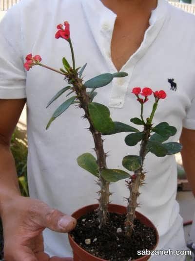 شرایط رشد گل مرجان