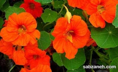 گل مناسب باغچه