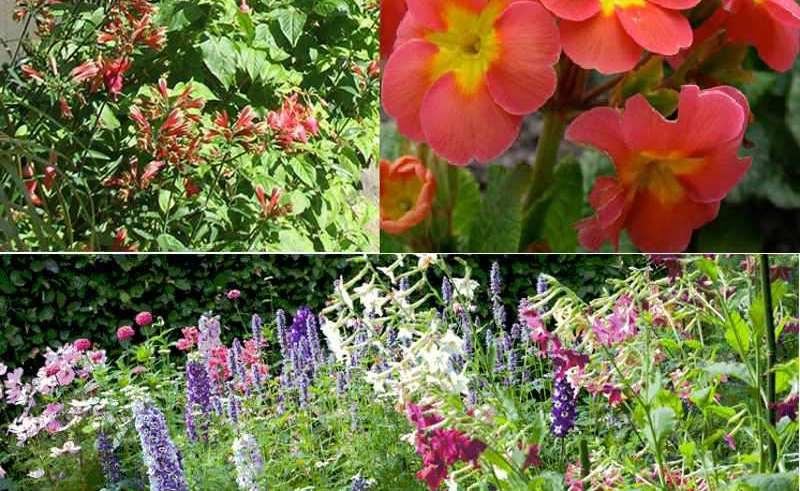 پرورش گل مناسب در باغچه