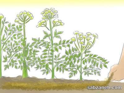 تقویت خاک گیاه گلپر