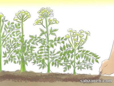 خاک کاشت گلپر