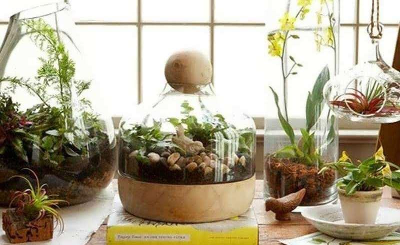 گیاهان مناسب برای پرورش در تراریوم