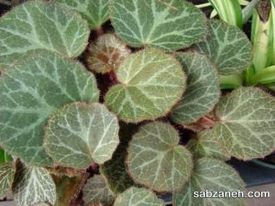 گل مناسب برای پرورش در تراریوم