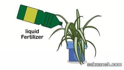 کو مناسب برای پرورش گل عنکبوتی