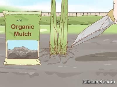 خاک مناسب برای تکثیر گل زنجبیلی