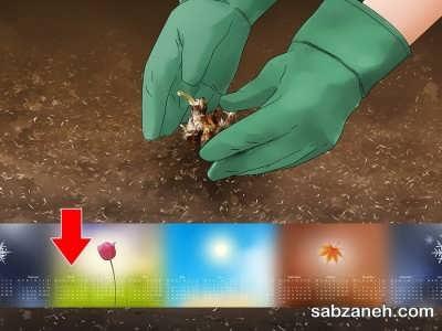 خاک مناسب برای گل مریم