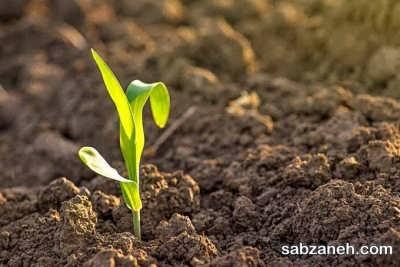 پرورش گیاه ذرت