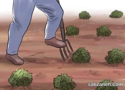 مراقبت از بادام زمینی