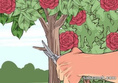 هرس و نگه داری گل کاملیا