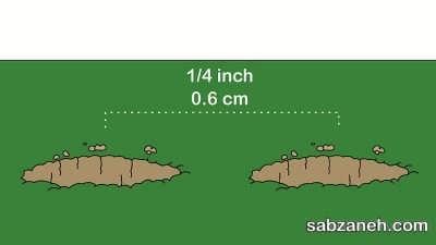 حفر گودال مناسب برای کاشت فلفل سیاه