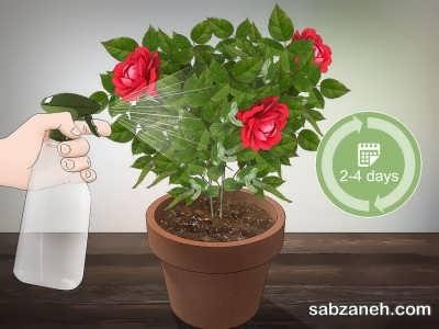 غبار پاشی برای گل ساناز