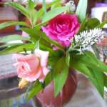 پرورش گل ساناز در منزل