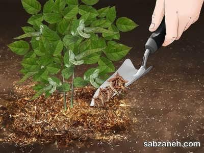 خاک مناسب برای کاشت ساناز