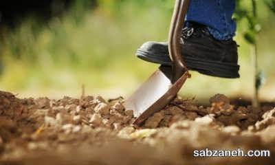 خاک مناسب برای کاشت زرشک