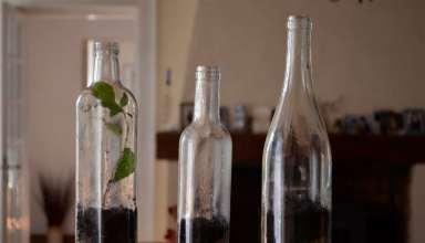 مراحل کاشت گیاه در بطری