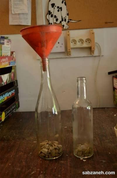 کاشت گیاه در بطری