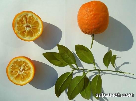 نحوه تکثیر درخت نارنج و پرورش این درخت زیبا