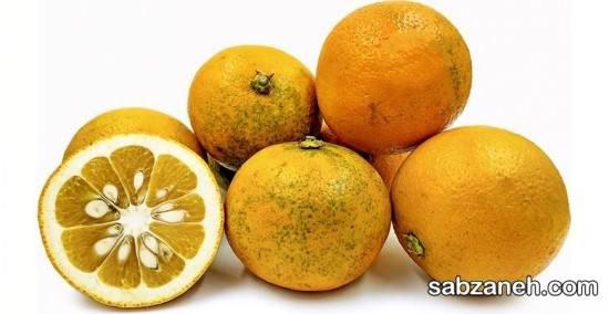 چگونگی تکثیر درخت نارنج