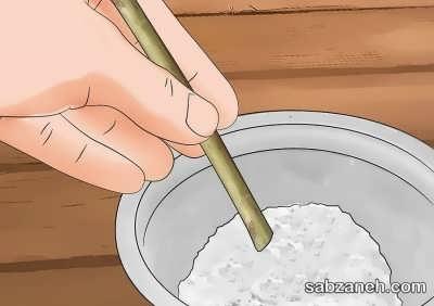 آغشته کردن قلمه یاس با هورمون ریشه زایی