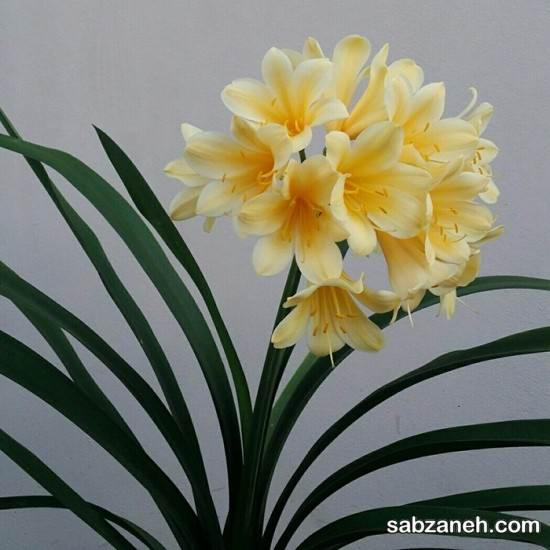 آنچه باید درمورد پرورش گل خورشیدی بدانید