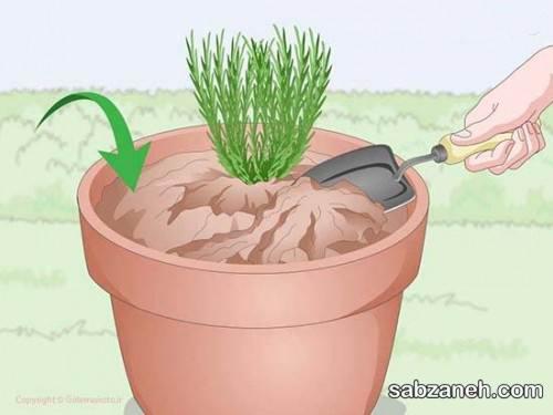 اسطوخودوس از جمله گیاهان دارویی
