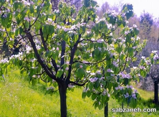 نحوه پرورش و کاشت درخت به