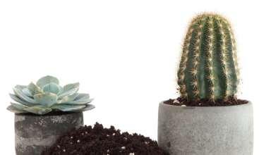 آشنایی با نحوه تعویض خاک گلدان کاکتوس