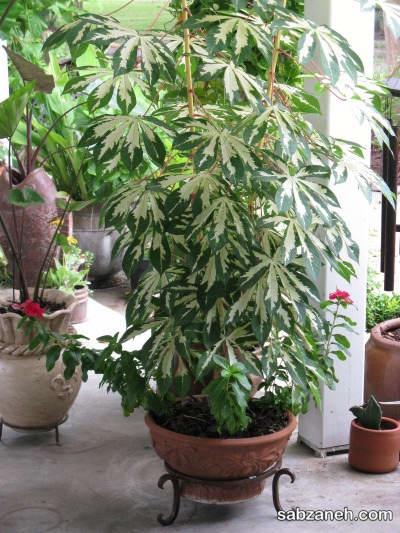 خاک مناسب برای پرورش گیاه توری