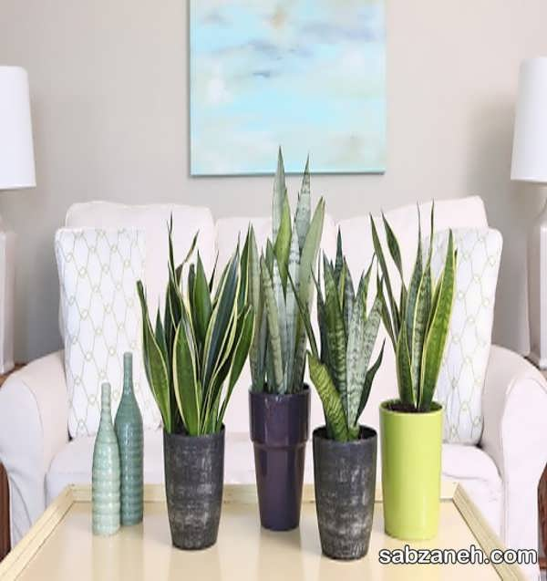 گیاهان مخصوص اتاق خواب