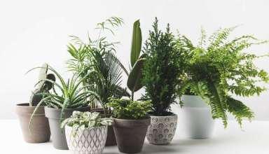 گیاهان برای اتاق خواب