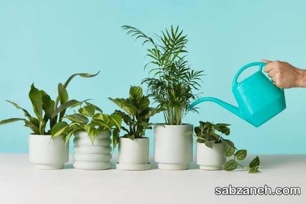 نحوه ی آبیاری گیاهان آپارتمانی