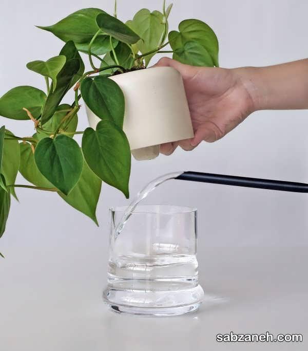 آبیاری گیاهان در منزل به شیوه ی صحیح