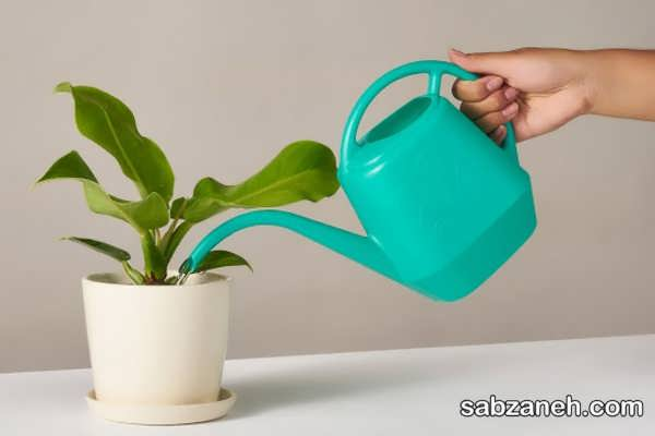 نکات آبیاری گیاهان