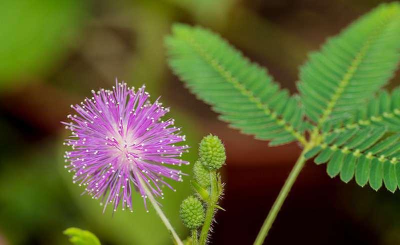نحوه رشد و پرورش گل قهر و آشتی