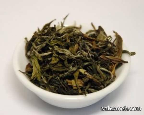 روش کاشتن و فرآوری چای سبز