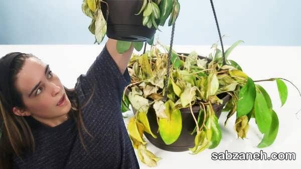 روش های از بین بردن پژمردگی گل و گیاهان