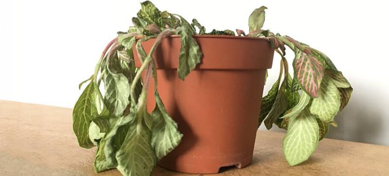 نحوه رفع پژمردگی گل و گیاه